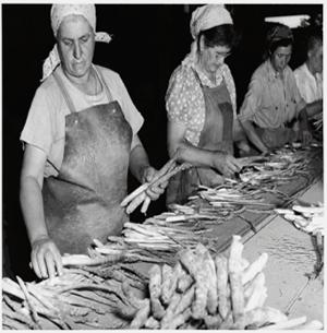 Grading Asparagus