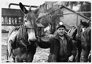 Miner and Mule